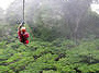 Mystic Mountain � Zipline and Sky Explorer